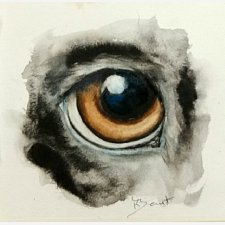 Animal Eyes 2: Dog's Eye