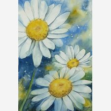 Daisies in Watercolour